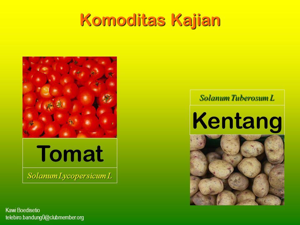 Solanum Lycopersicum L