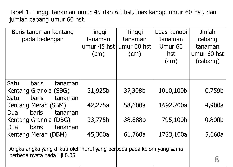 Baris tanaman kentang pada bedengan Tinggi tanaman umur 45 hst (cm)