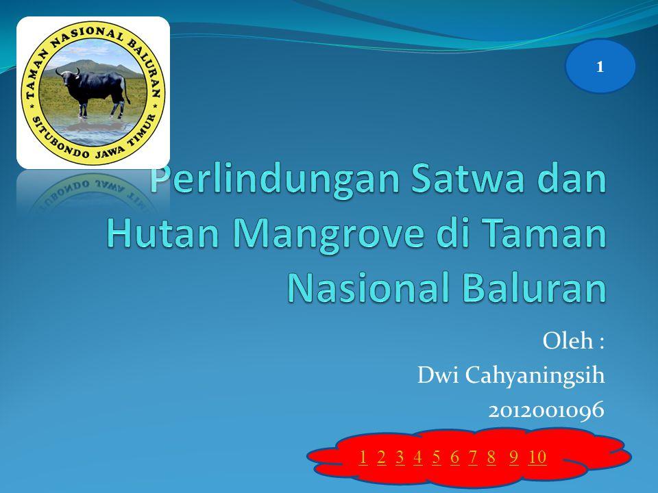 Perlindungan Satwa dan Hutan Mangrove di Taman Nasional Baluran