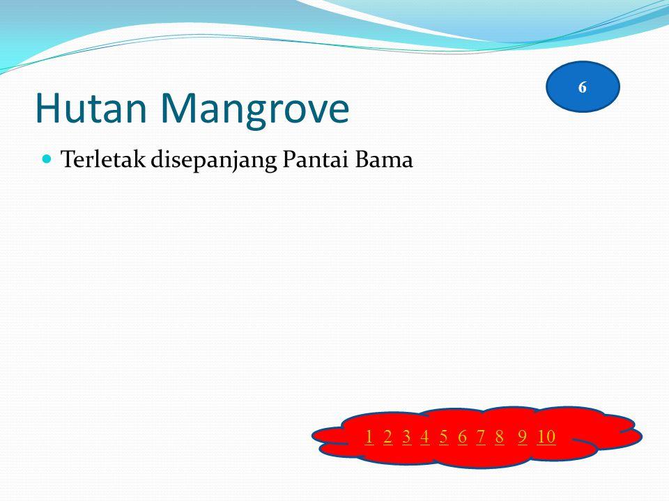 Hutan Mangrove 6 Terletak disepanjang Pantai Bama 1 2 3 4 5 6 7 8 9 10