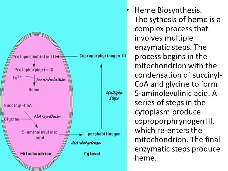 Heme Biosynthesis.