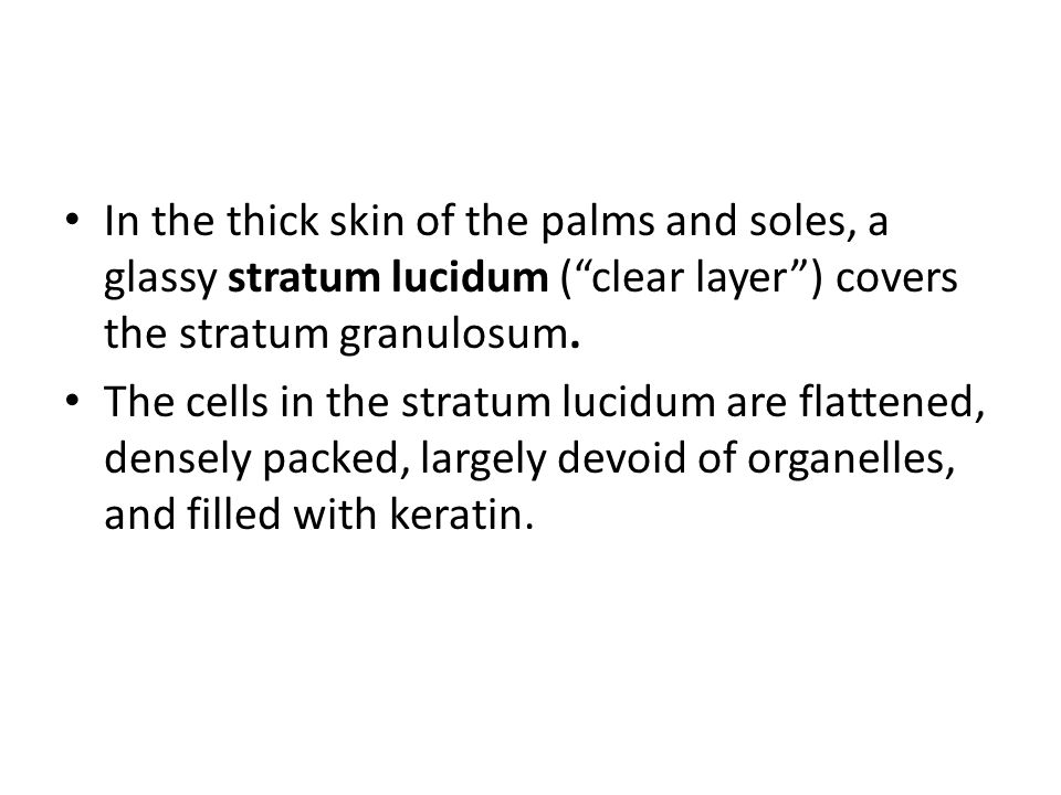 In the thick skin of the palms and soles, a glassy stratum lucidum ( clear layer ) covers the stratum granulosum.