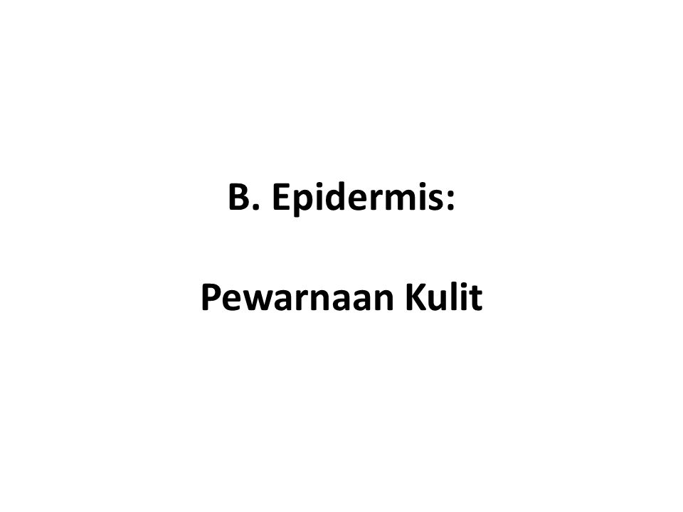 B. Epidermis: Pewarnaan Kulit