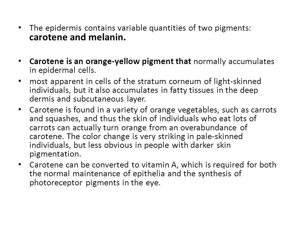 The epidermis contains variable quantities of two pigments: carotene and melanin.