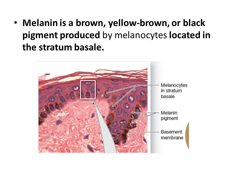 Melanin is a brown, yellow-brown, or black pigment produced by melanocytes located in the stratum basale.