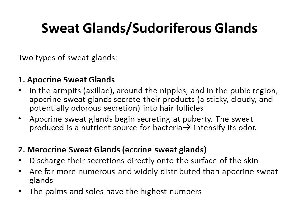 Sweat Glands/Sudoriferous Glands