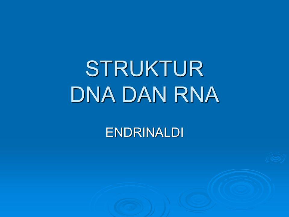 STRUKTUR DNA DAN RNA ENDRINALDI