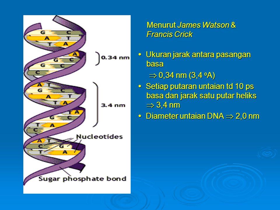 Menurut James Watson & Francis Crick