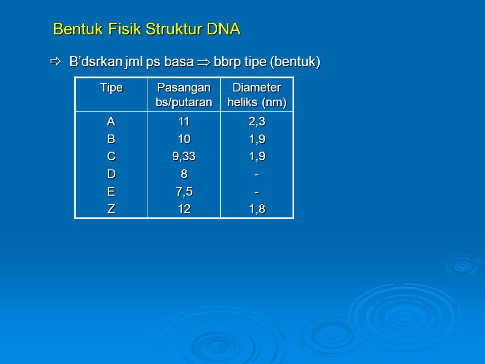 Bentuk Fisik Struktur DNA  B'dsrkan jml ps basa  bbrp tipe (bentuk)
