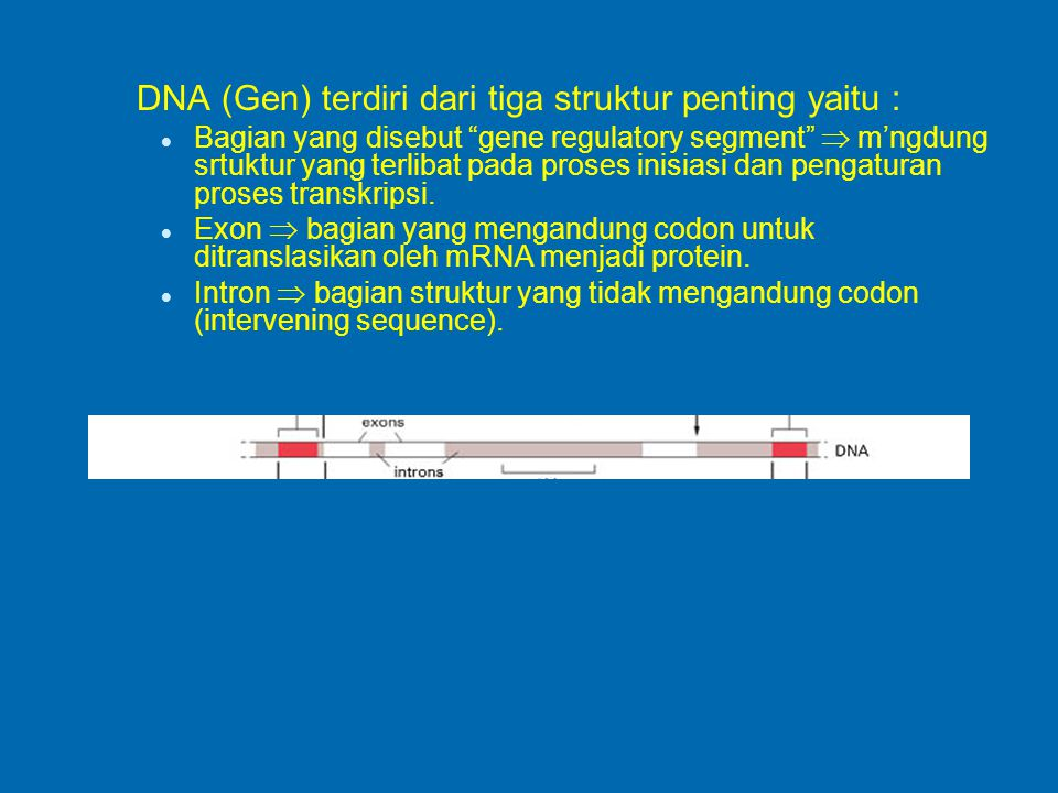 DNA (Gen) terdiri dari tiga struktur penting yaitu :