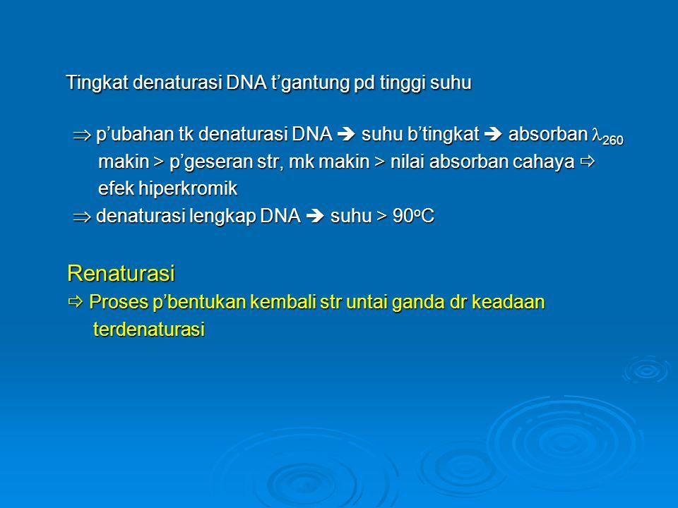 Tingkat denaturasi DNA t'gantung pd tinggi suhu