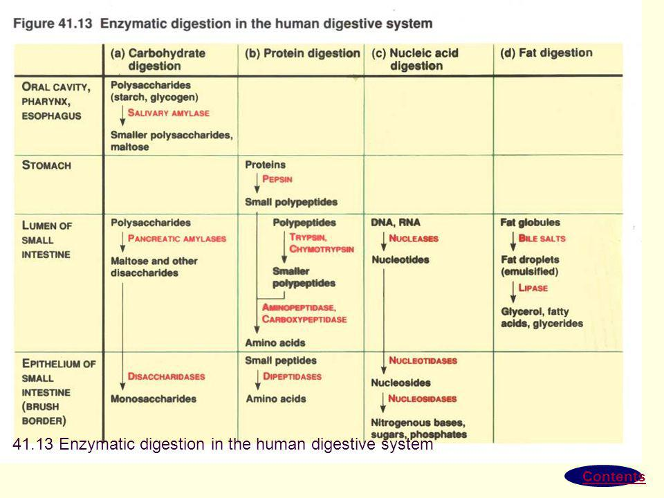 41.13 Enzymatic digestion in the human digestive system