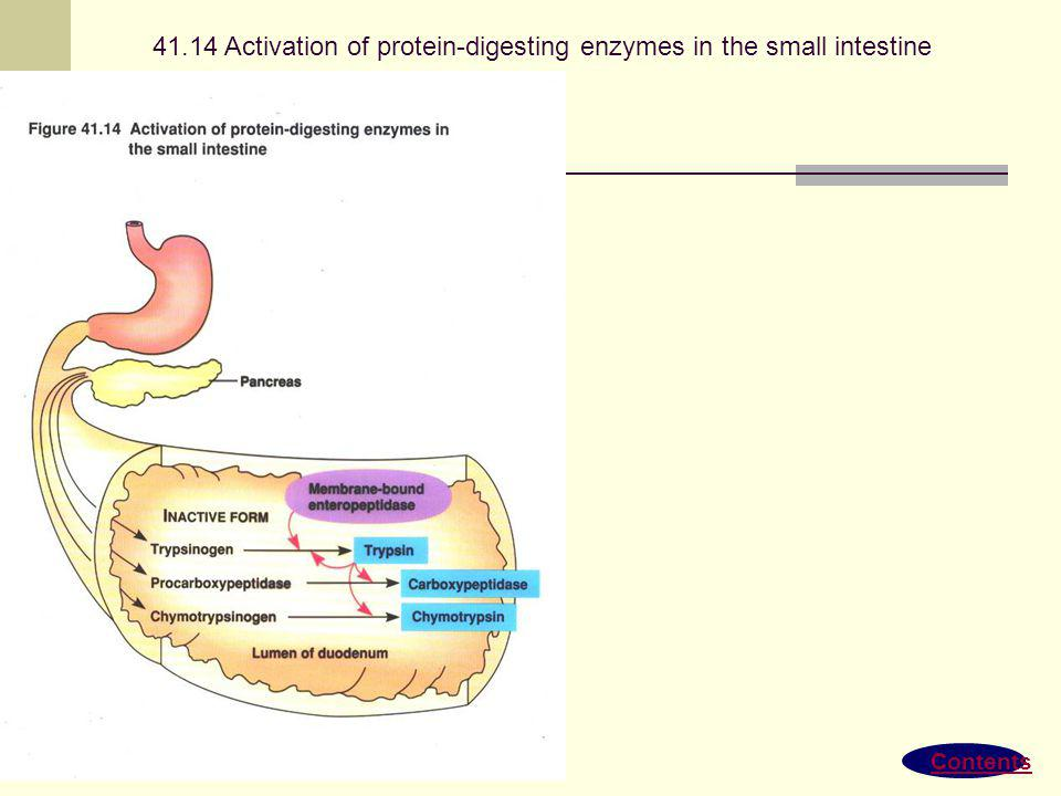 41.14 Activation of protein-digesting enzymes in the small intestine