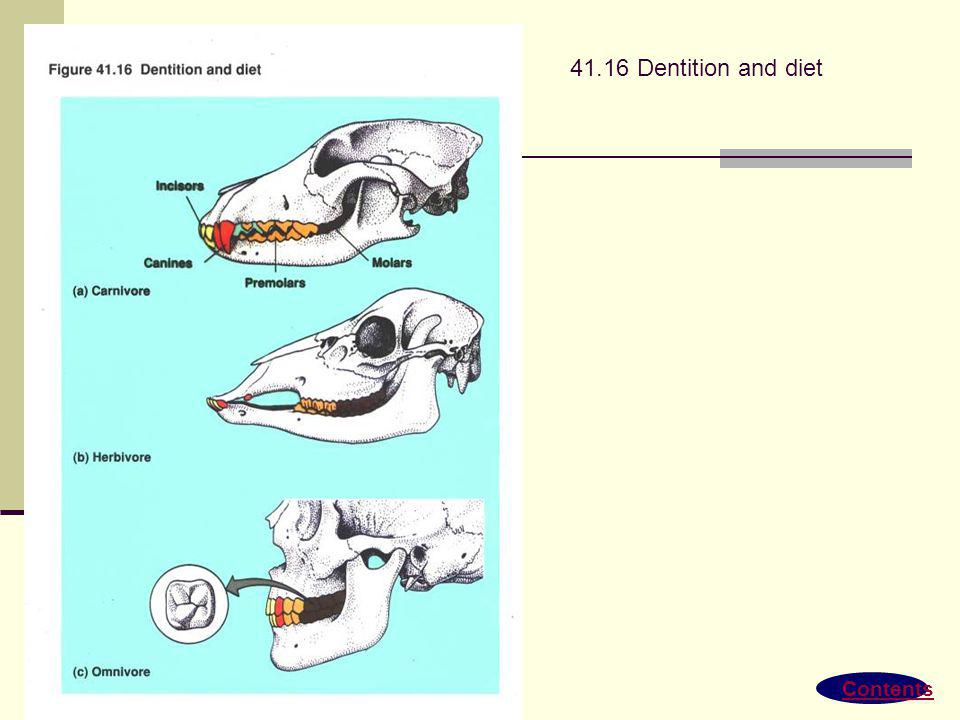 41.16 Dentition and diet Contents