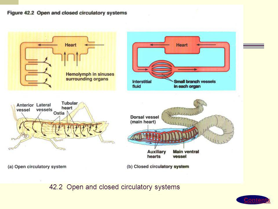 42.2 Open and closed circulatory systems