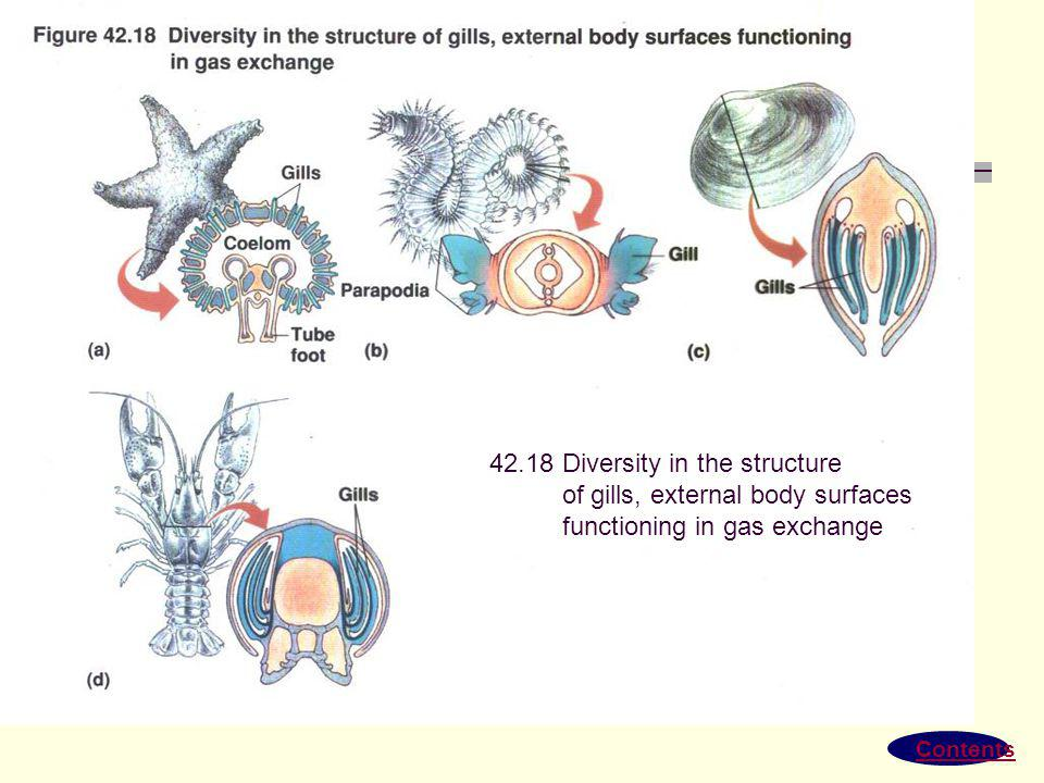 42.18 Diversity in the structure of gills, external body surfaces