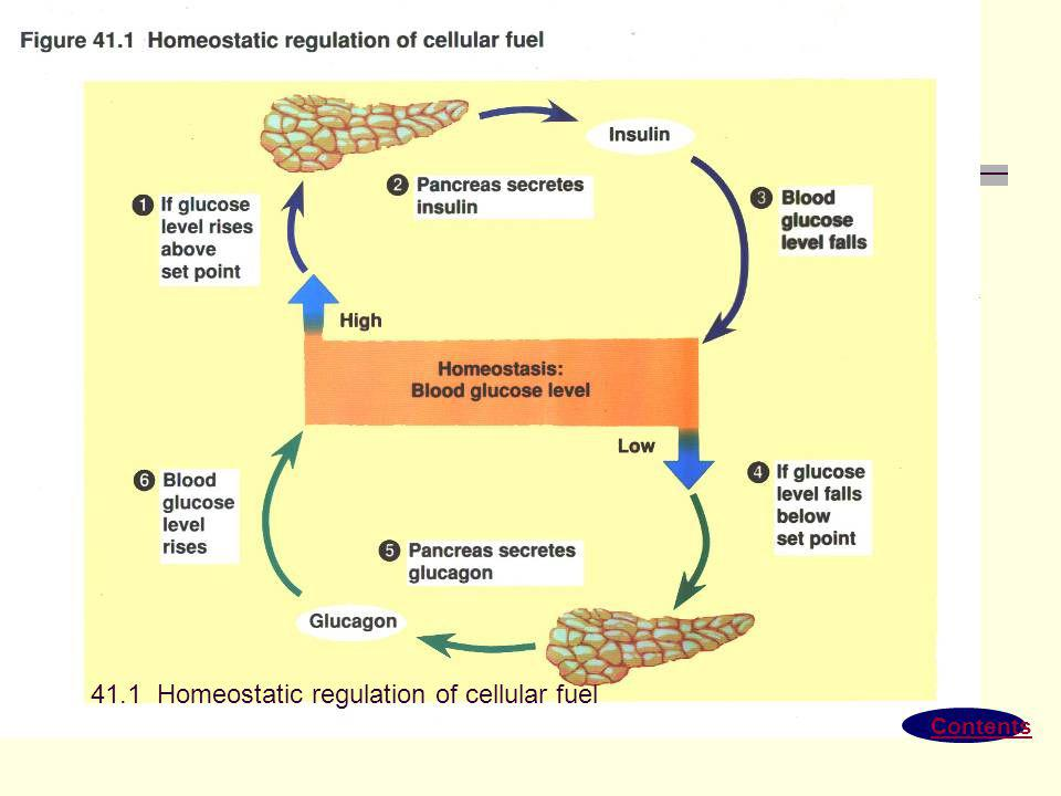 41.1 Homeostatic regulation of cellular fuel