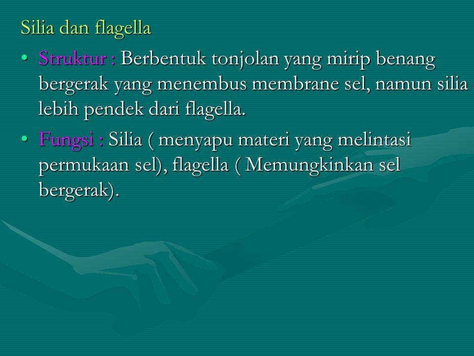 Silia dan flagella Struktur : Berbentuk tonjolan yang mirip benang bergerak yang menembus membrane sel, namun silia lebih pendek dari flagella.
