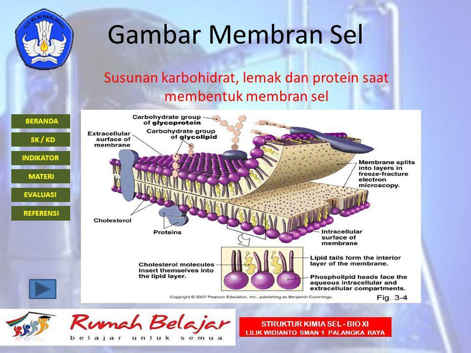 Susunan karbohidrat, lemak dan protein saat membentuk membran sel