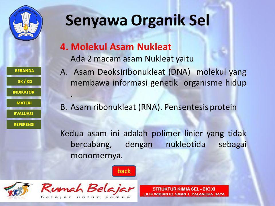 Senyawa Organik Sel 4. Molekul Asam Nukleat Ada 2 macam asam Nukleat yaitu.