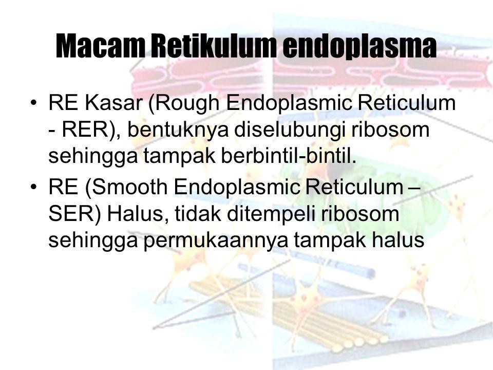 Macam Retikulum endoplasma