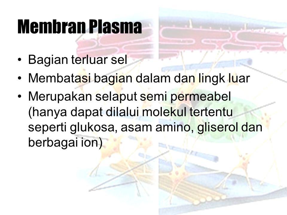 Membran Plasma Bagian terluar sel