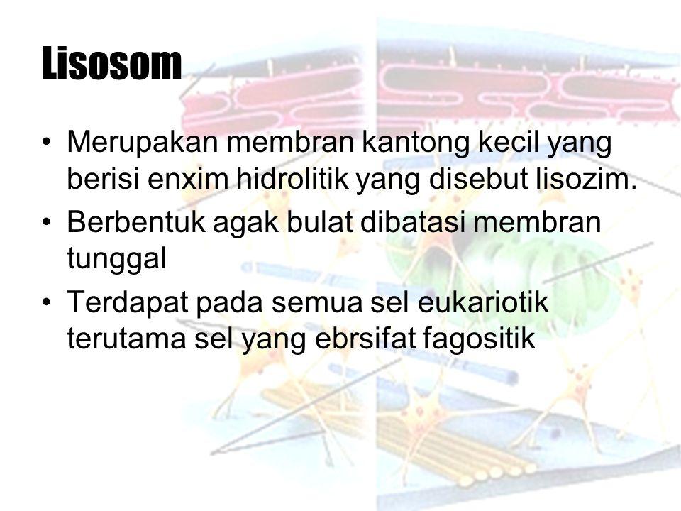 Lisosom Merupakan membran kantong kecil yang berisi enxim hidrolitik yang disebut lisozim. Berbentuk agak bulat dibatasi membran tunggal.