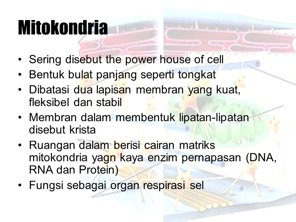 Mitokondria Sering disebut the power house of cell