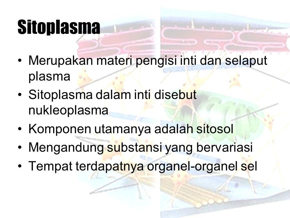Sitoplasma Merupakan materi pengisi inti dan selaput plasma