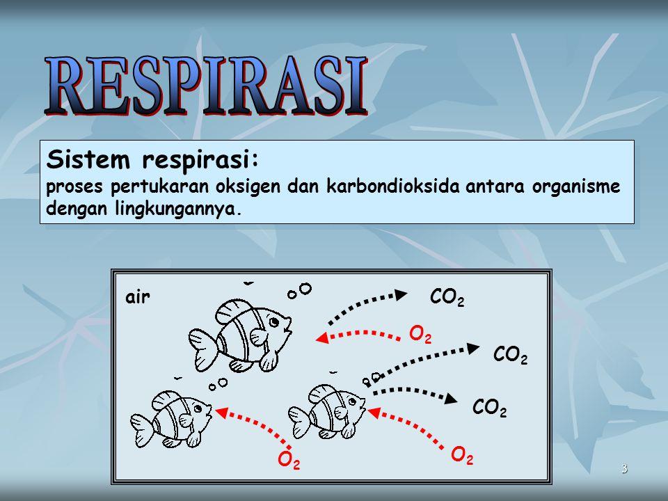 RESPIRASI Sistem respirasi: