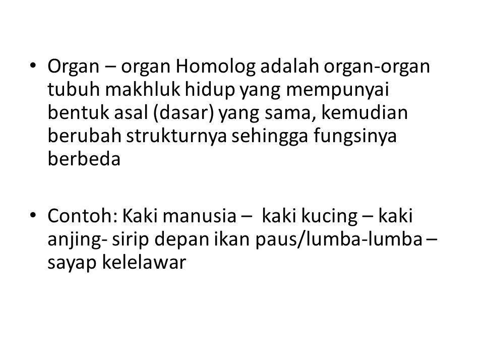 Organ – organ Homolog adalah organ-organ tubuh makhluk hidup yang mempunyai bentuk asal (dasar) yang sama, kemudian berubah strukturnya sehingga fungsinya berbeda