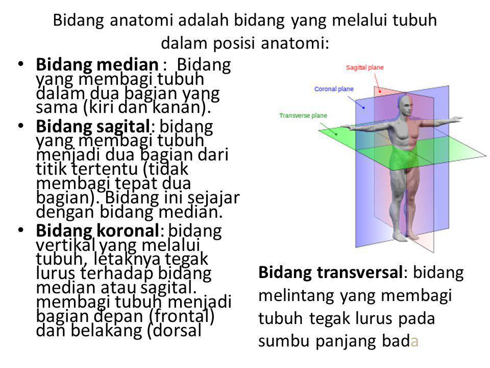 Bidang anatomi adalah bidang yang melalui tubuh dalam posisi anatomi: