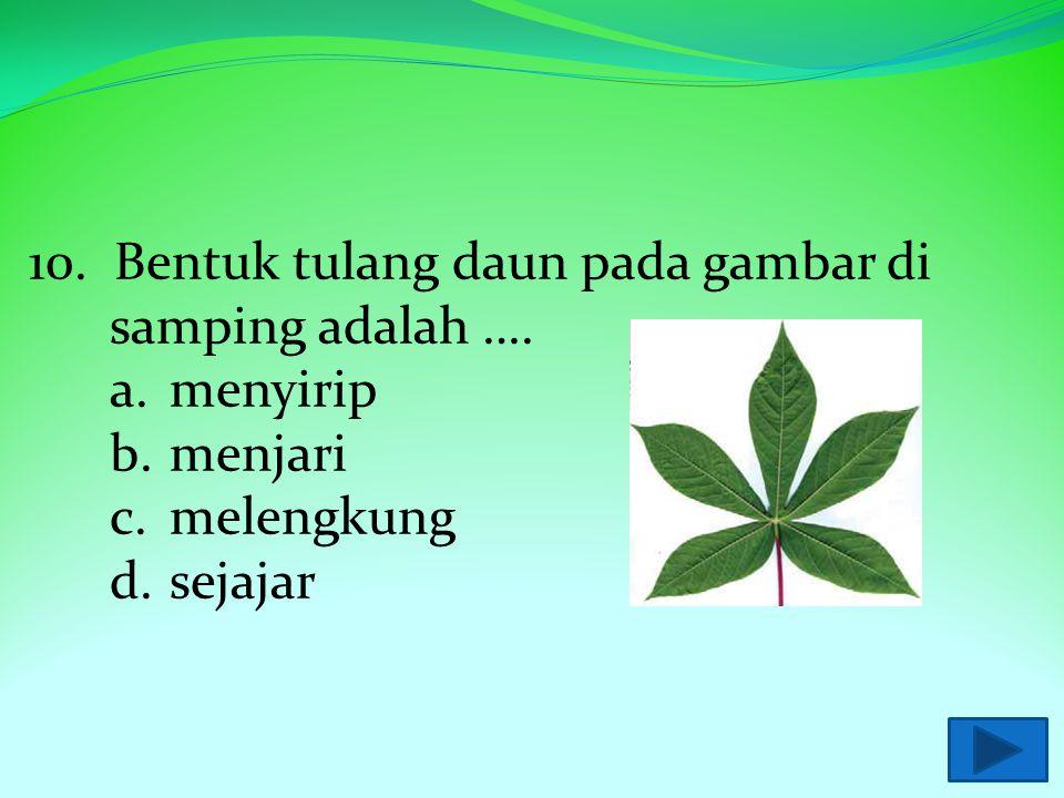 10. Bentuk tulang daun pada gambar di samping adalah ….