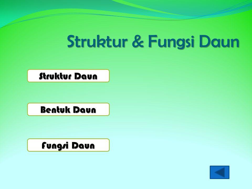 Struktur & Fungsi Daun Struktur Daun Bentuk Daun Fungsi Daun