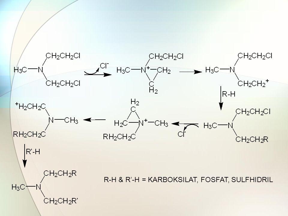 R-H & R'-H = KARBOKSILAT, FOSFAT, SULFHIDRIL