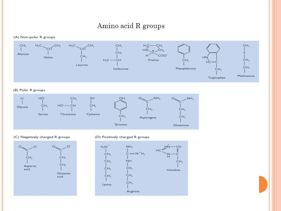 Amino acid R groups