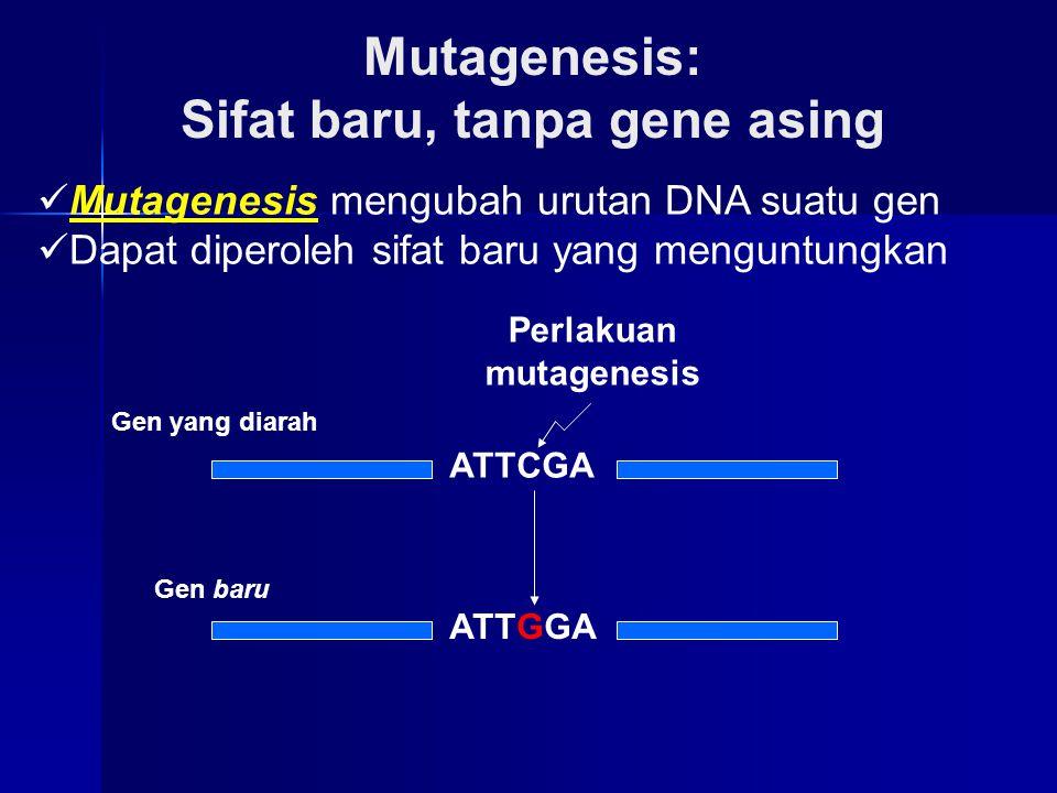 Sifat baru, tanpa gene asing