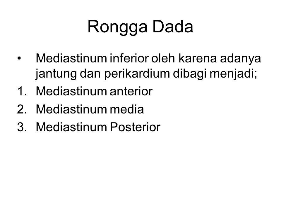 Rongga Dada Mediastinum inferior oleh karena adanya jantung dan perikardium dibagi menjadi; Mediastinum anterior.
