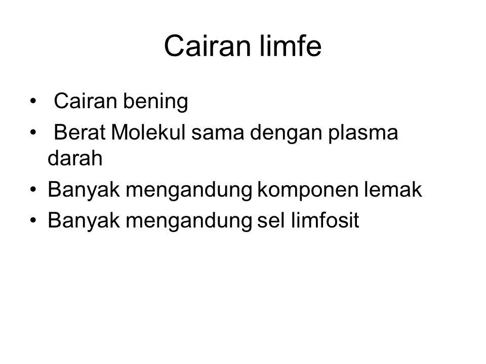 Cairan limfe Cairan bening Berat Molekul sama dengan plasma darah