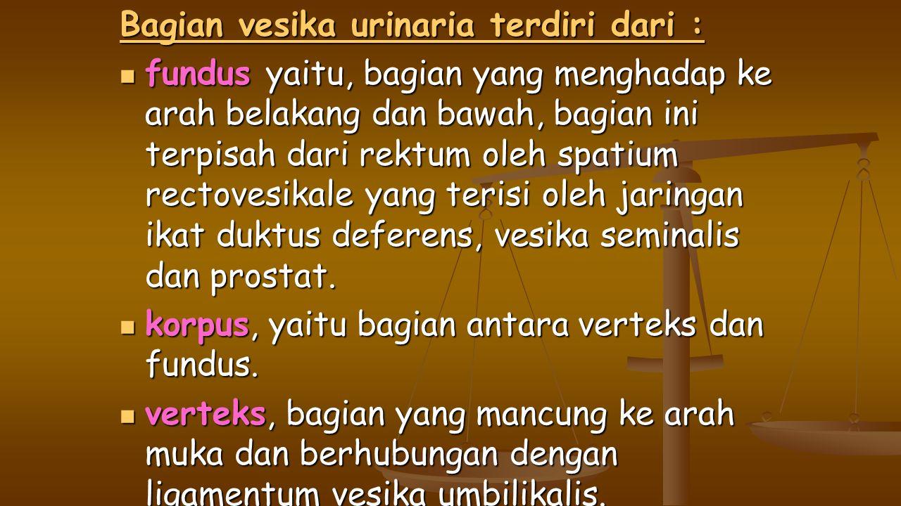 Bagian vesika urinaria terdiri dari :