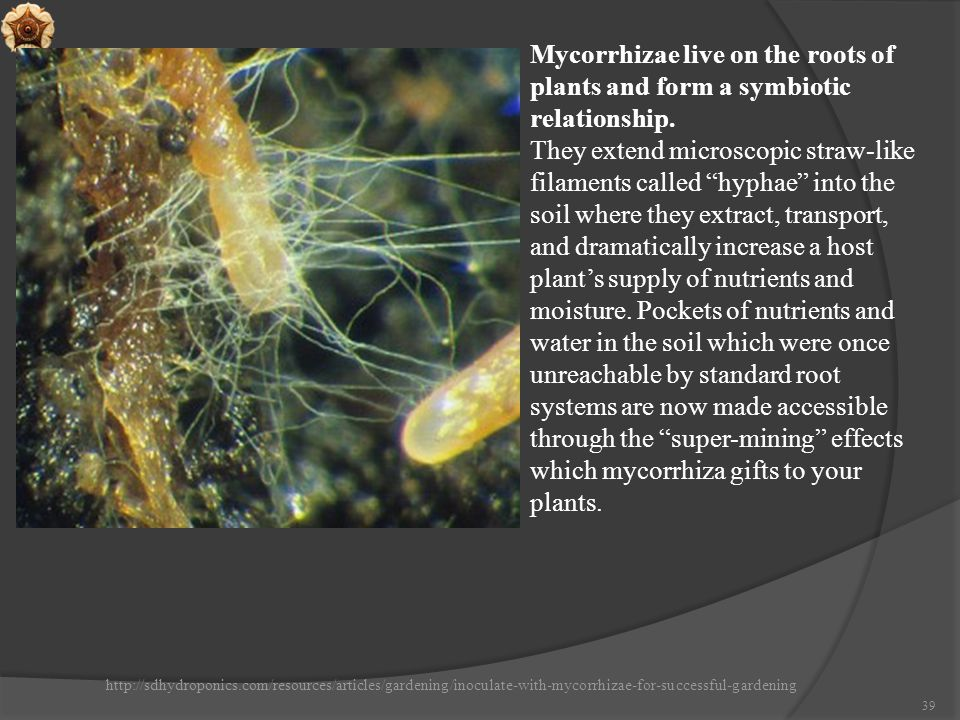 Mycorrhizae live on the roots of plants and form a symbiotic relationship.