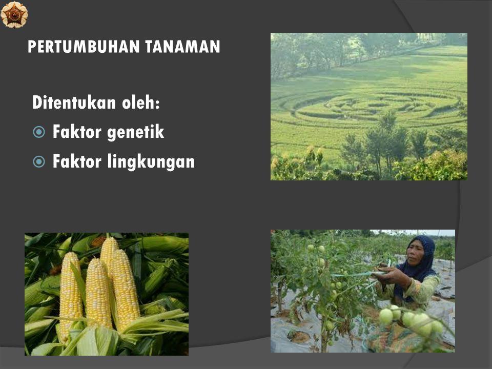 PERTUMBUHAN TANAMAN Ditentukan oleh: Faktor genetik Faktor lingkungan