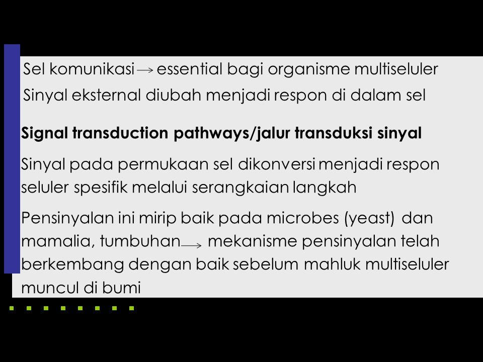 Sel komunikasi essential bagi organisme multiseluler