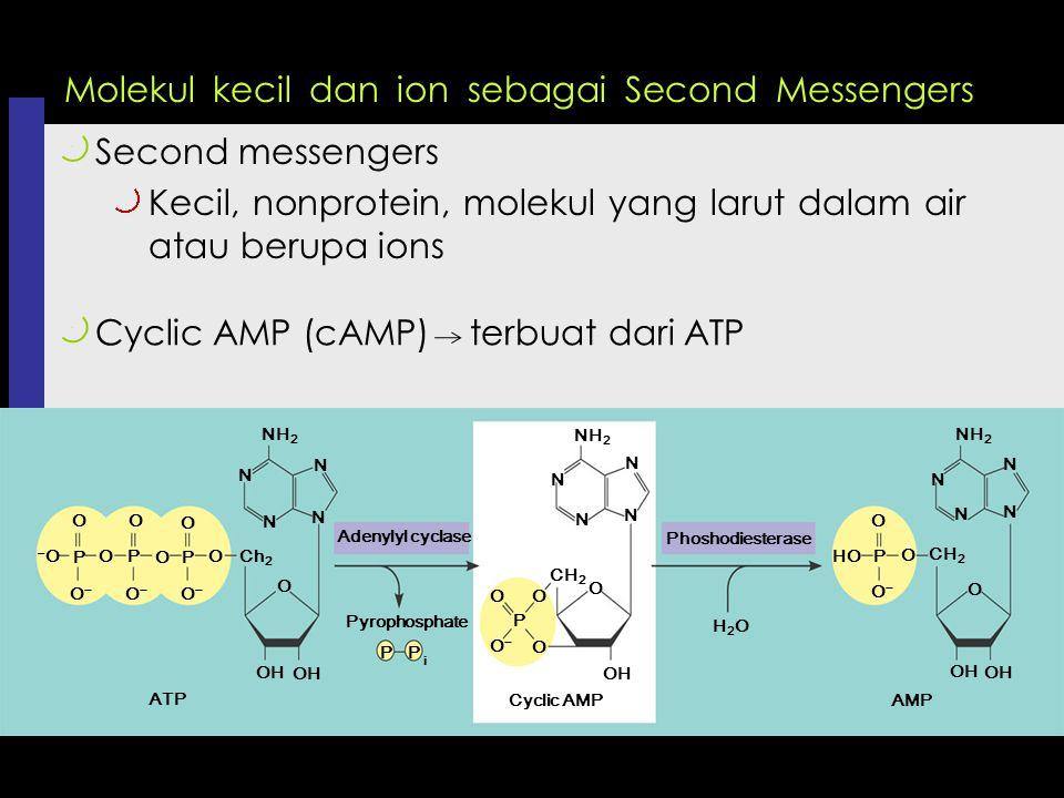 Molekul kecil dan ion sebagai Second Messengers