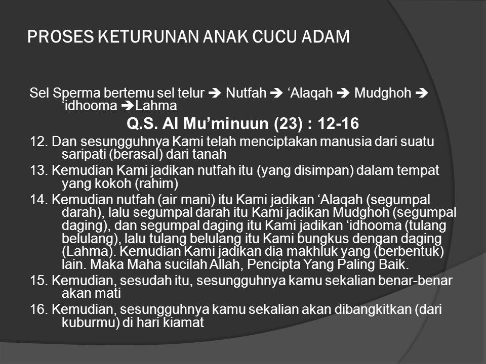 PROSES KETURUNAN ANAK CUCU ADAM