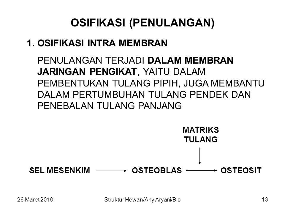 OSIFIKASI (PENULANGAN)