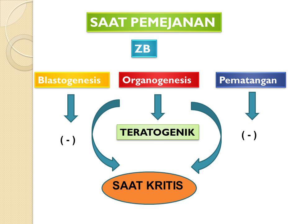 SAAT PEMEJANAN ZB SAAT KRITIS Blastogenesis Organogenesis Pematangan