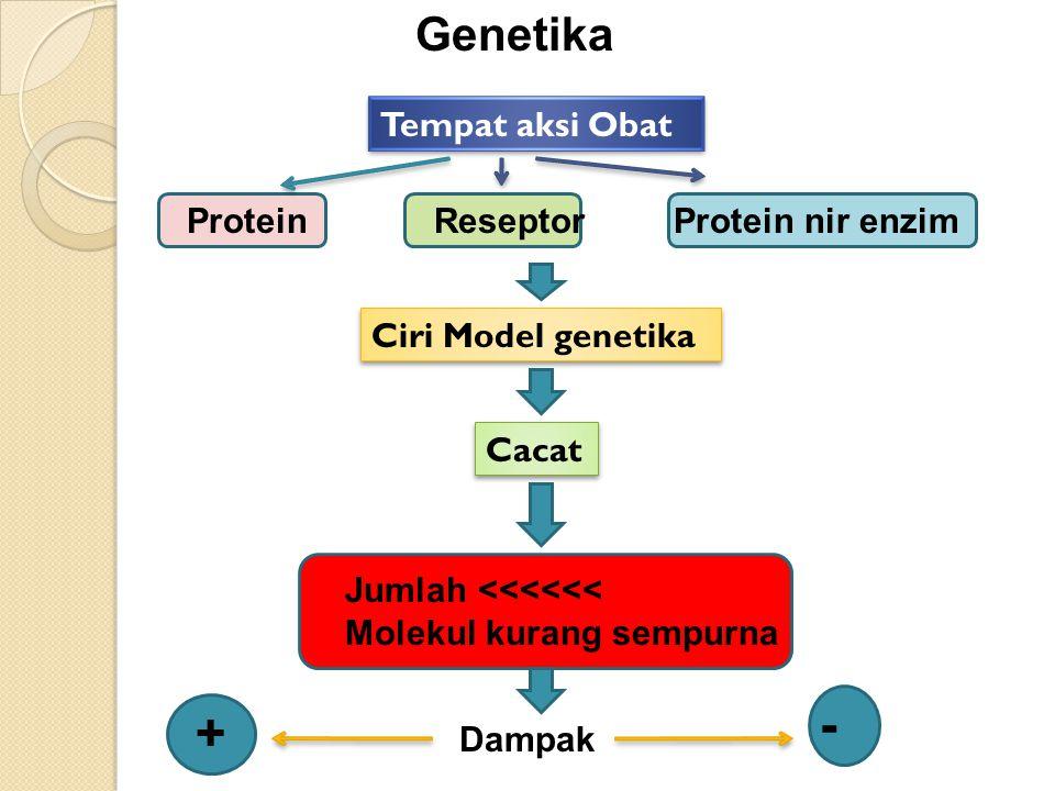 - + Genetika Tempat aksi Obat Protein Reseptor Protein nir enzim