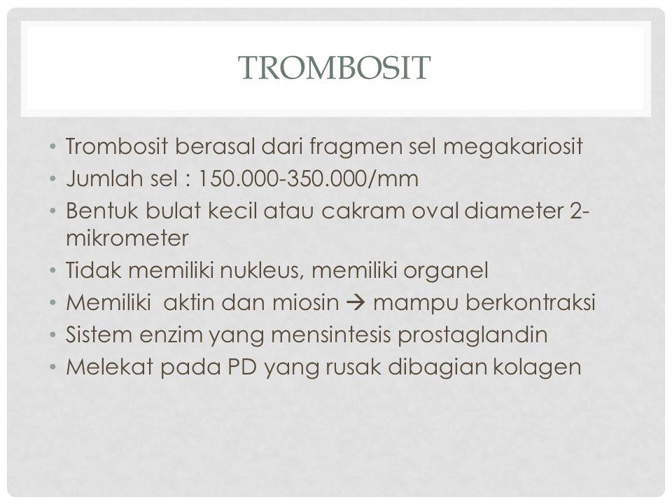 trombosit Trombosit berasal dari fragmen sel megakariosit