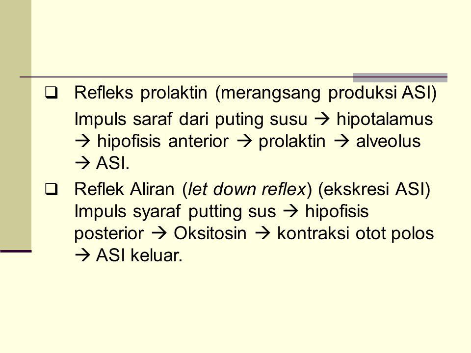 Refleks prolaktin (merangsang produksi ASI)